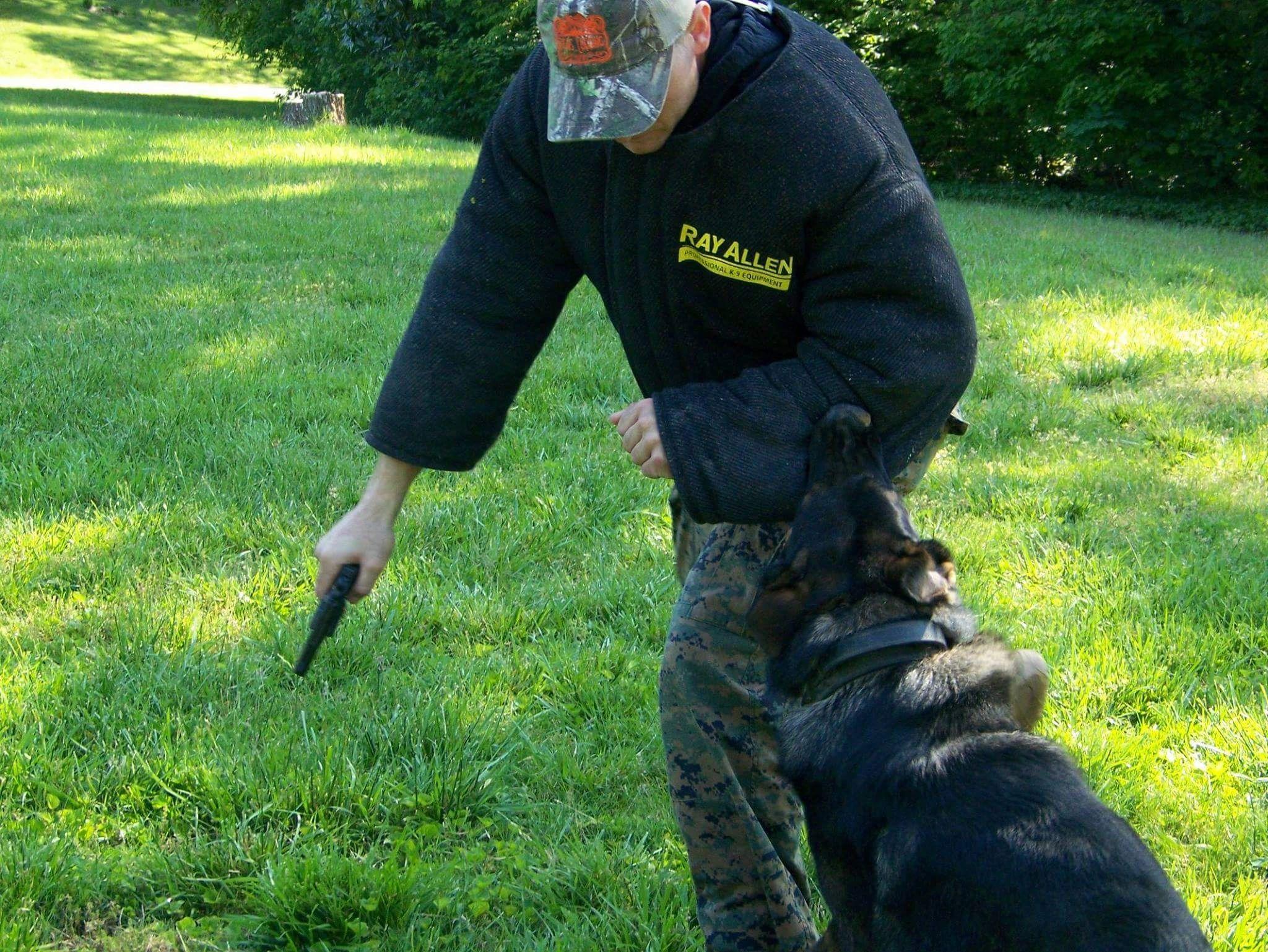 Cgsk9 Services Dog Training German Shepherd Puppies Dog