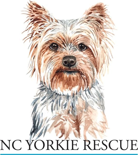 NC Yorkie Rescue