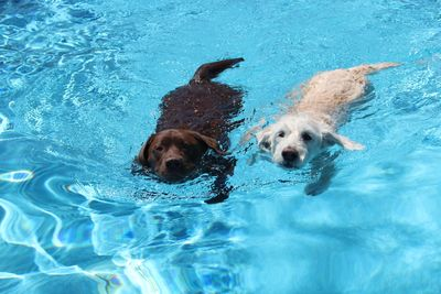 Sampson & Laney swimming together at our dog boarding ranch!