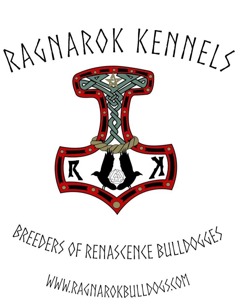 Ragnarok Kennels - Dog Breeder, Renascence Bulldogs
