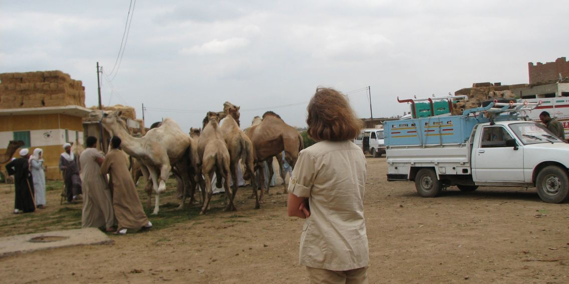 Camel market north east of Giza