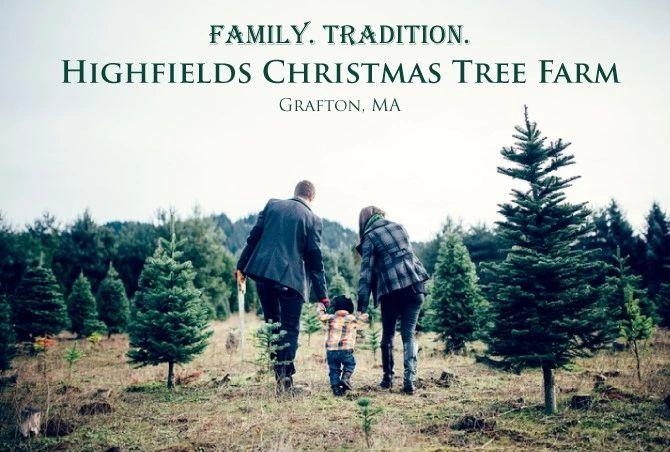 Christmas Tree Farm Highfields Christmas Tree Farm