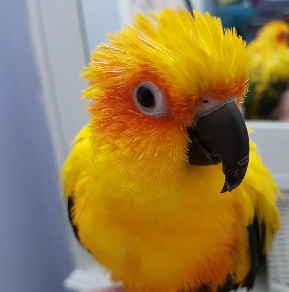 All Things Feathered - Pet Supplies, Bird Health, Mite
