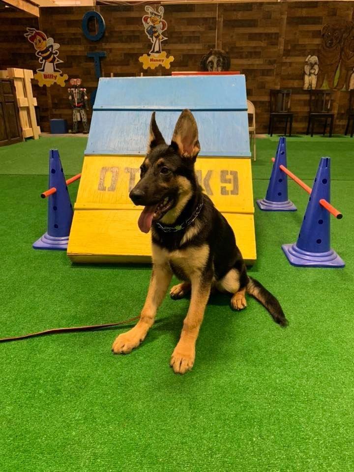 OTCK9 Dog Training - Dog Training, Boarding, Dog Daycare