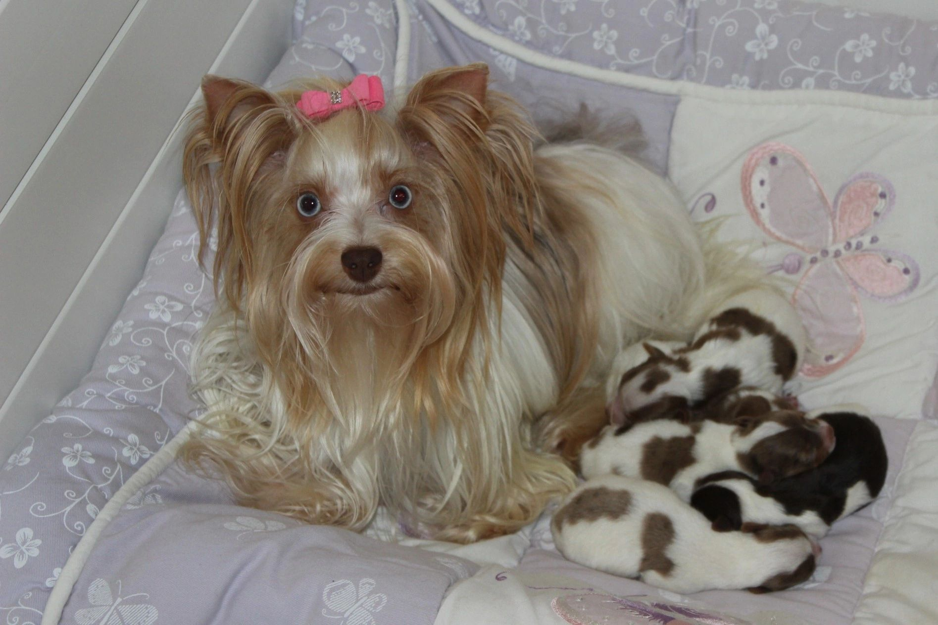 HOME | MY BABY YORKIE PAWS