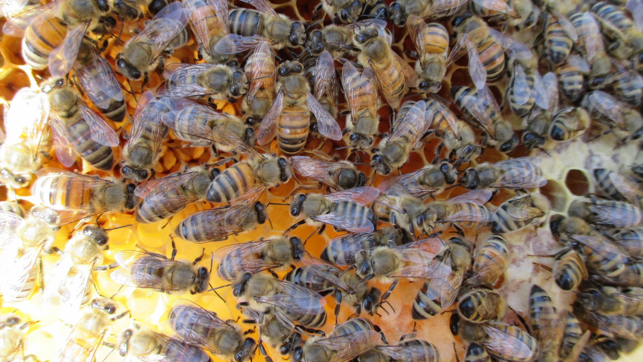 FAQ   Beekeeping Bliss