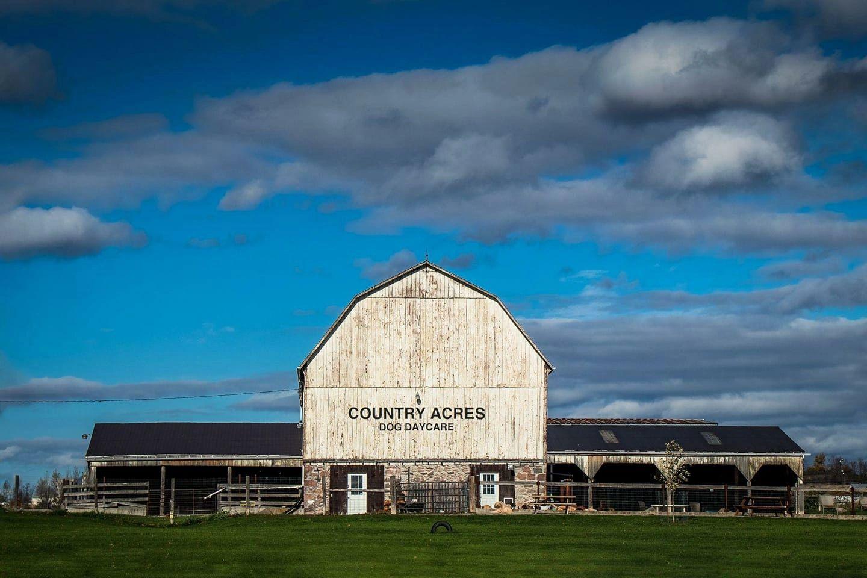 Country Acres Dog Daycare | 2500 Brown Line, Cavan Monaghan, ON K9J 6Z9 | +1 705-876-0437