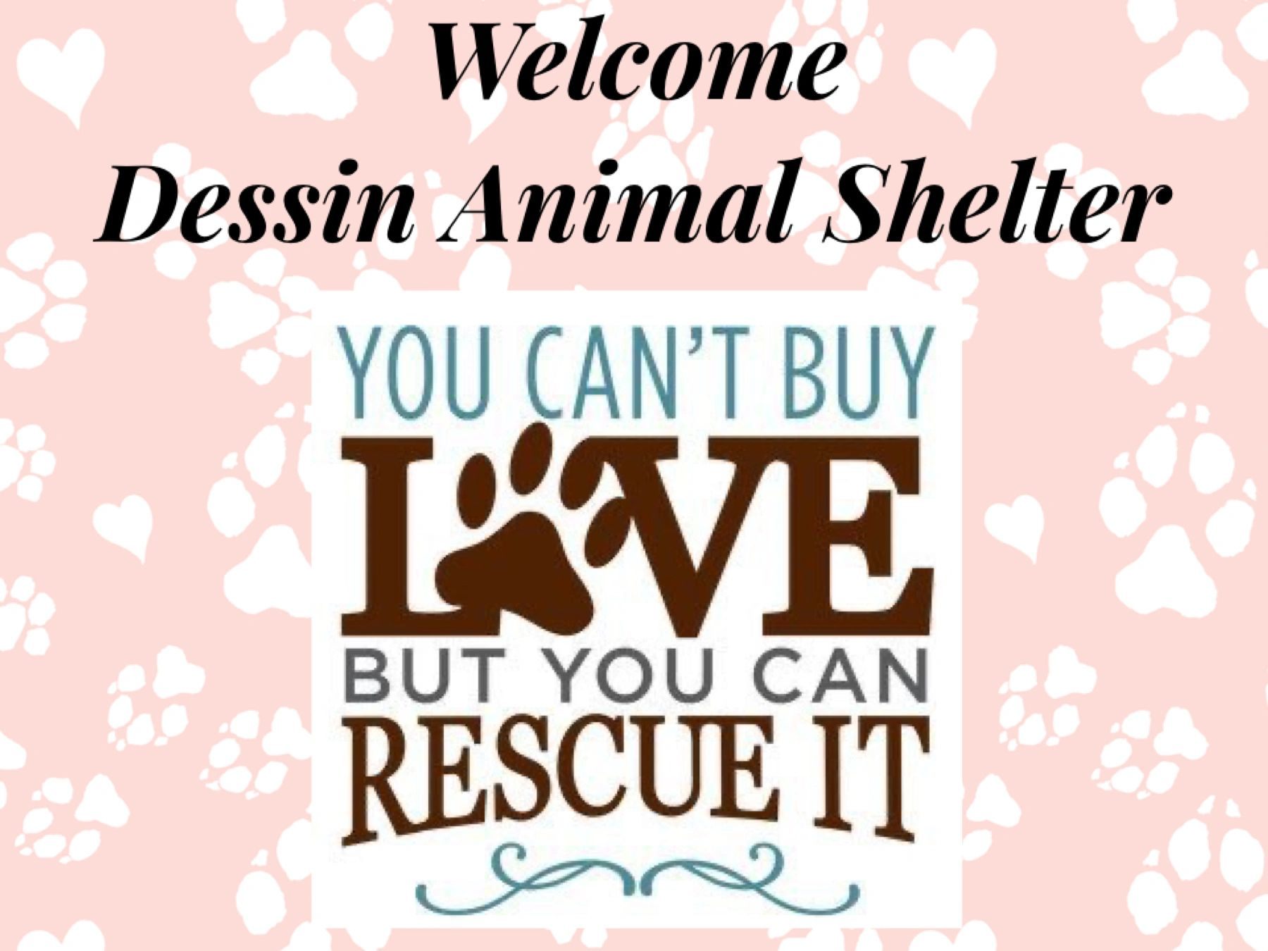 Dessin Animal Shelter Pet Adoption Nonprofit