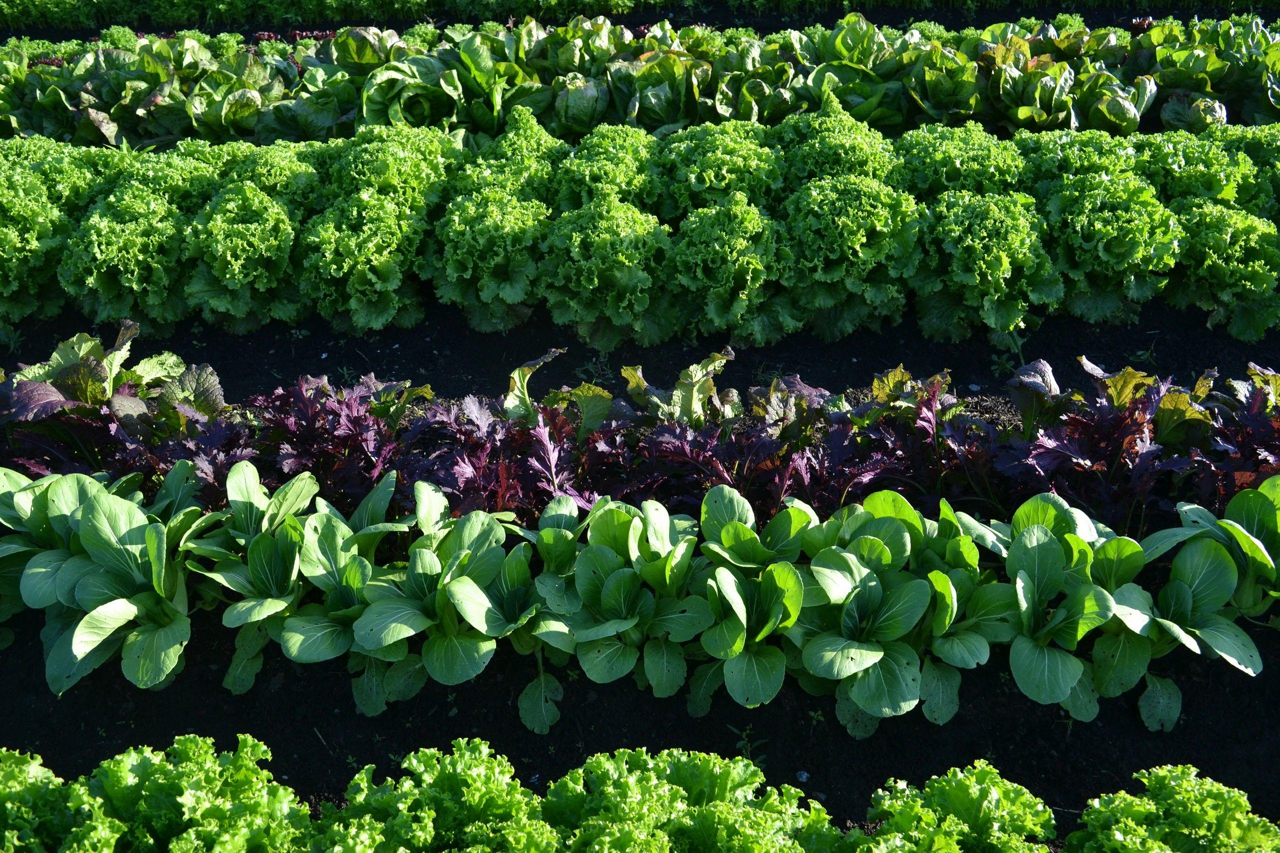 Lovin Mama Farm Farm Fresh To You Farm Amsterdam