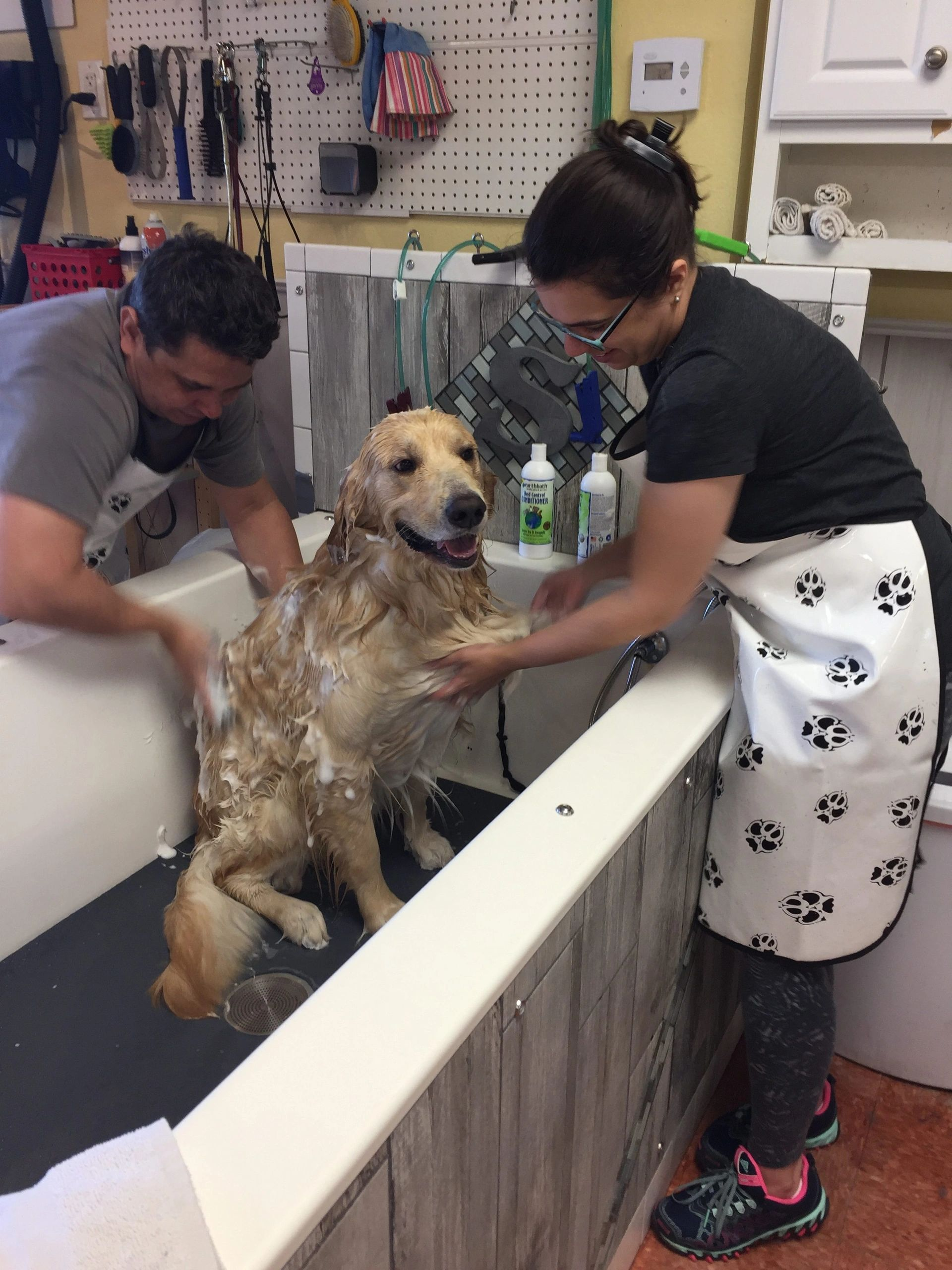Soapys dog wash dog washing in apopka solutioingenieria Gallery