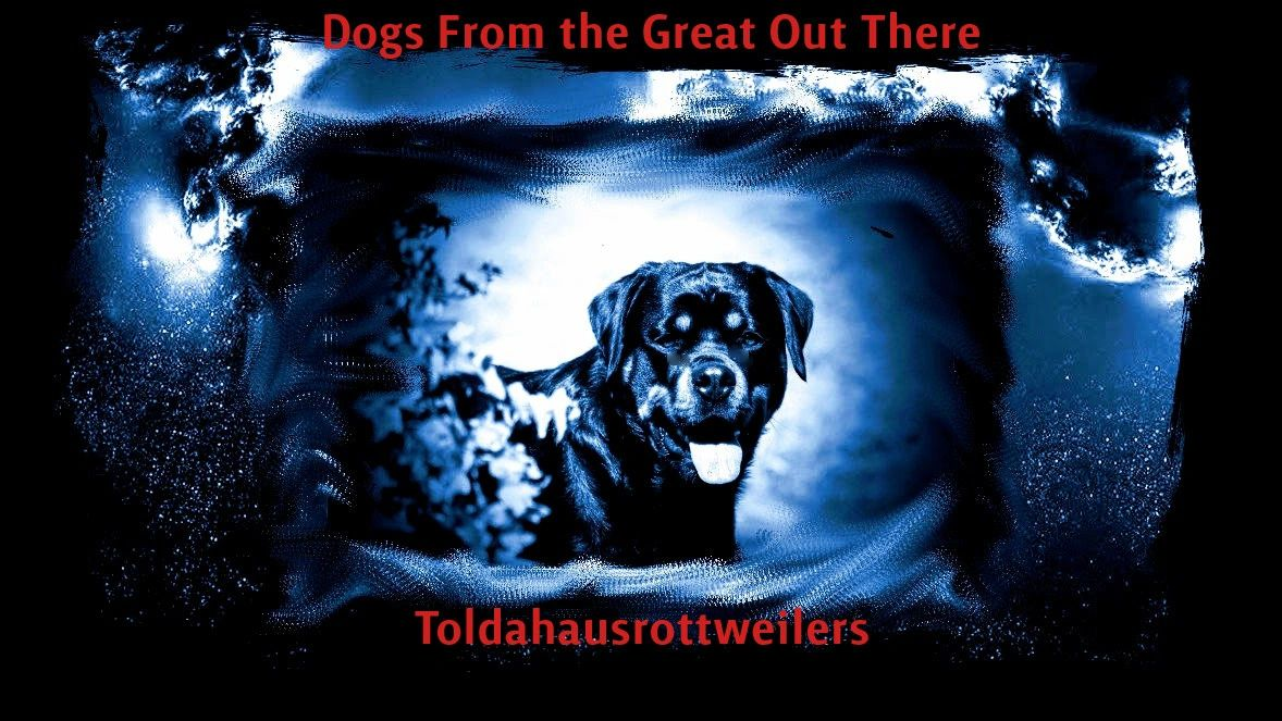 Toldahaus Rottweilers - Rottweiler Puppies, Puppies for Sale
