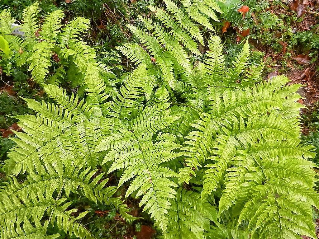 Salem Hardy Plant Society - List of Member Nurseries | Salem