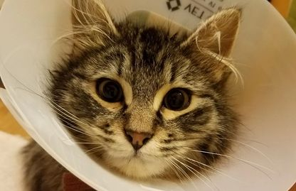 How You Can Help kitten