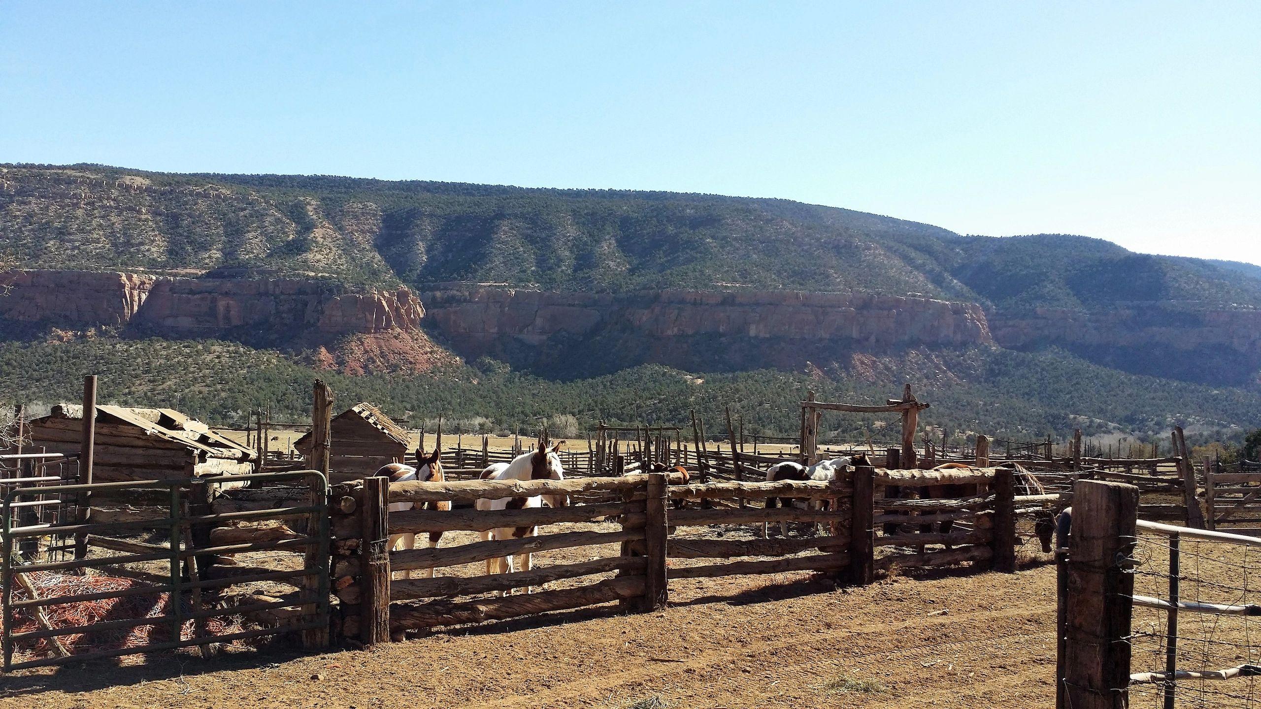 FAQ's | Escalante Ranch