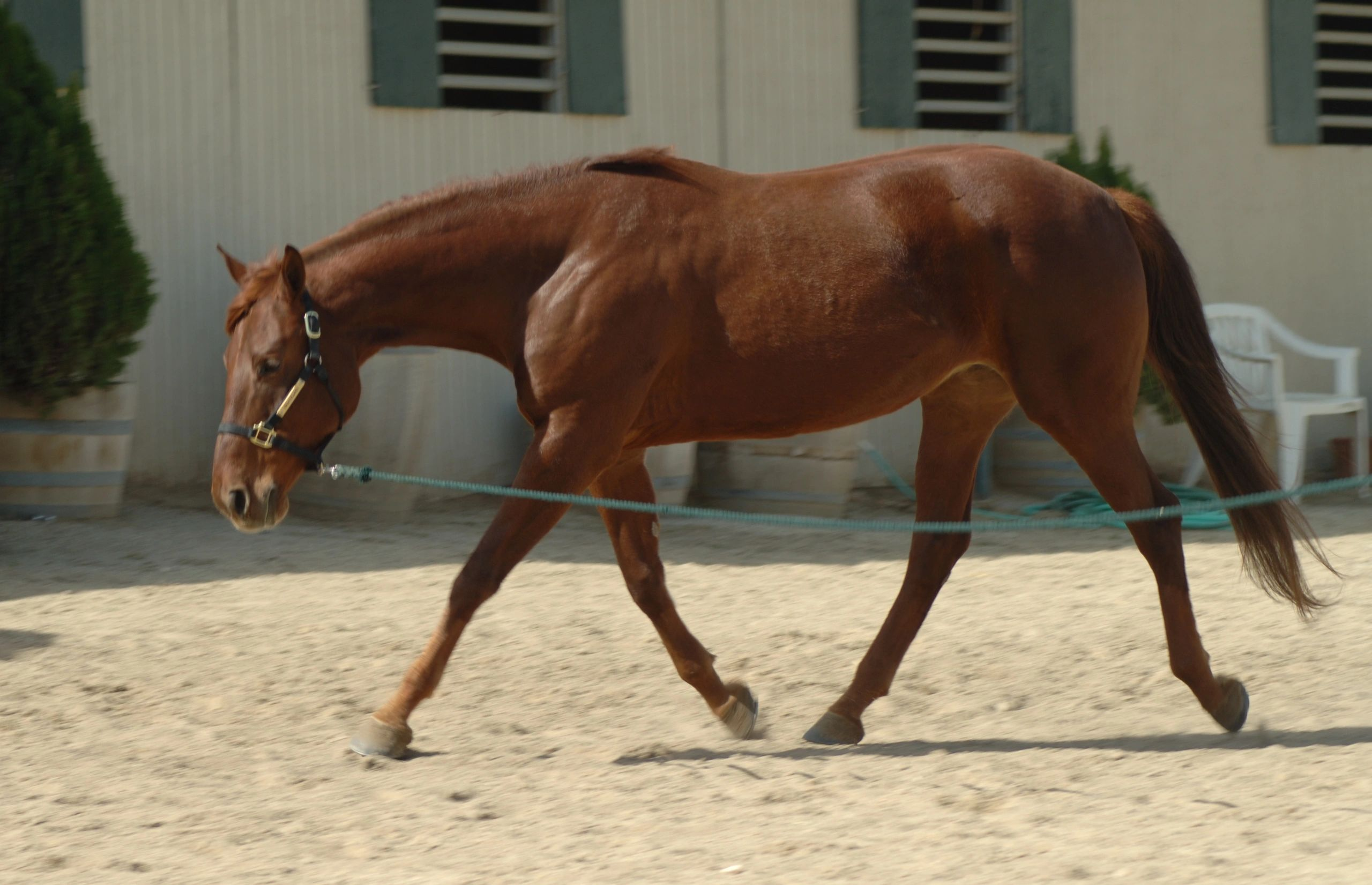 Pepper Tree Ranch - Equestrian, Horse Boarding