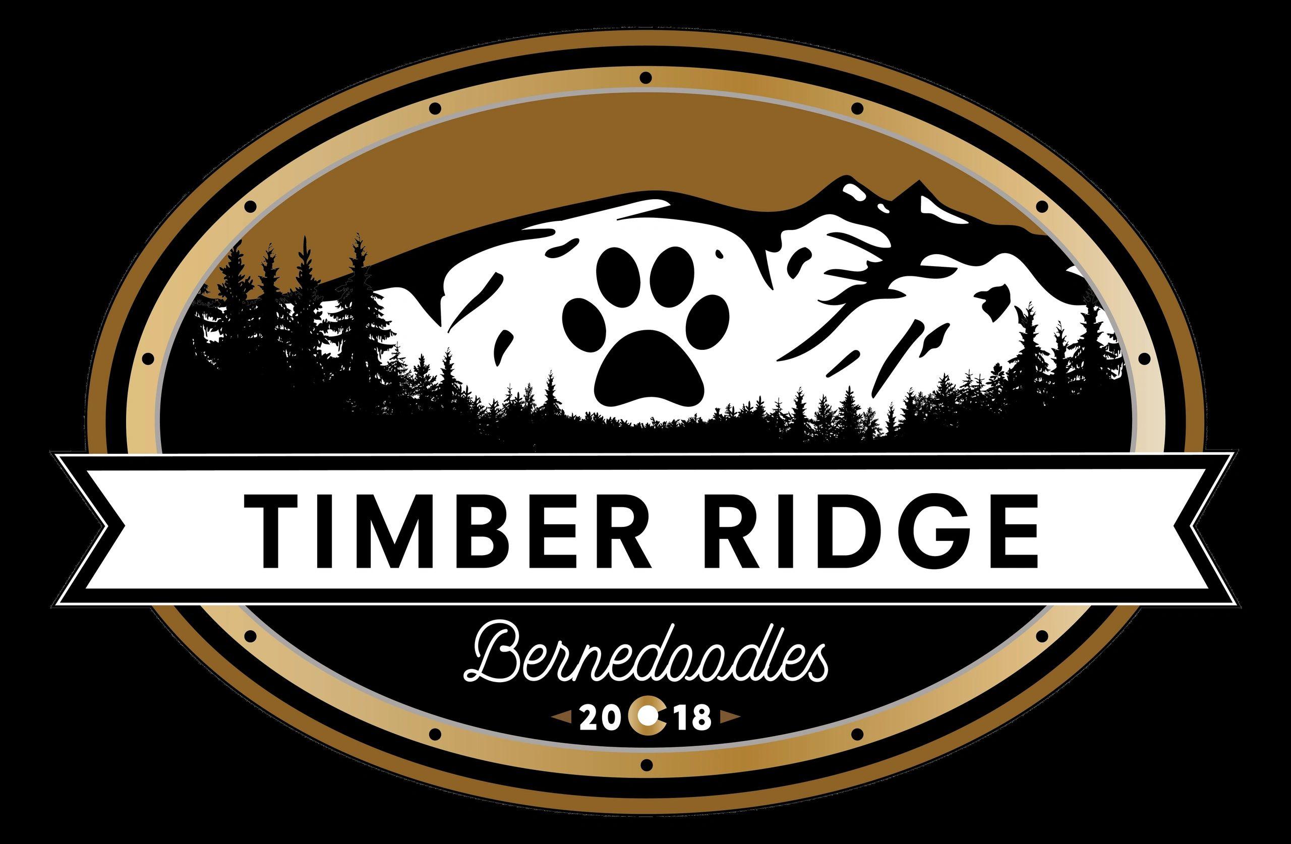 Timber Ridge Bernedoodles Puppies Bernedoodles Timber