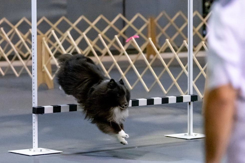 Indian River Dog Training Club - Home | Indian River Dog