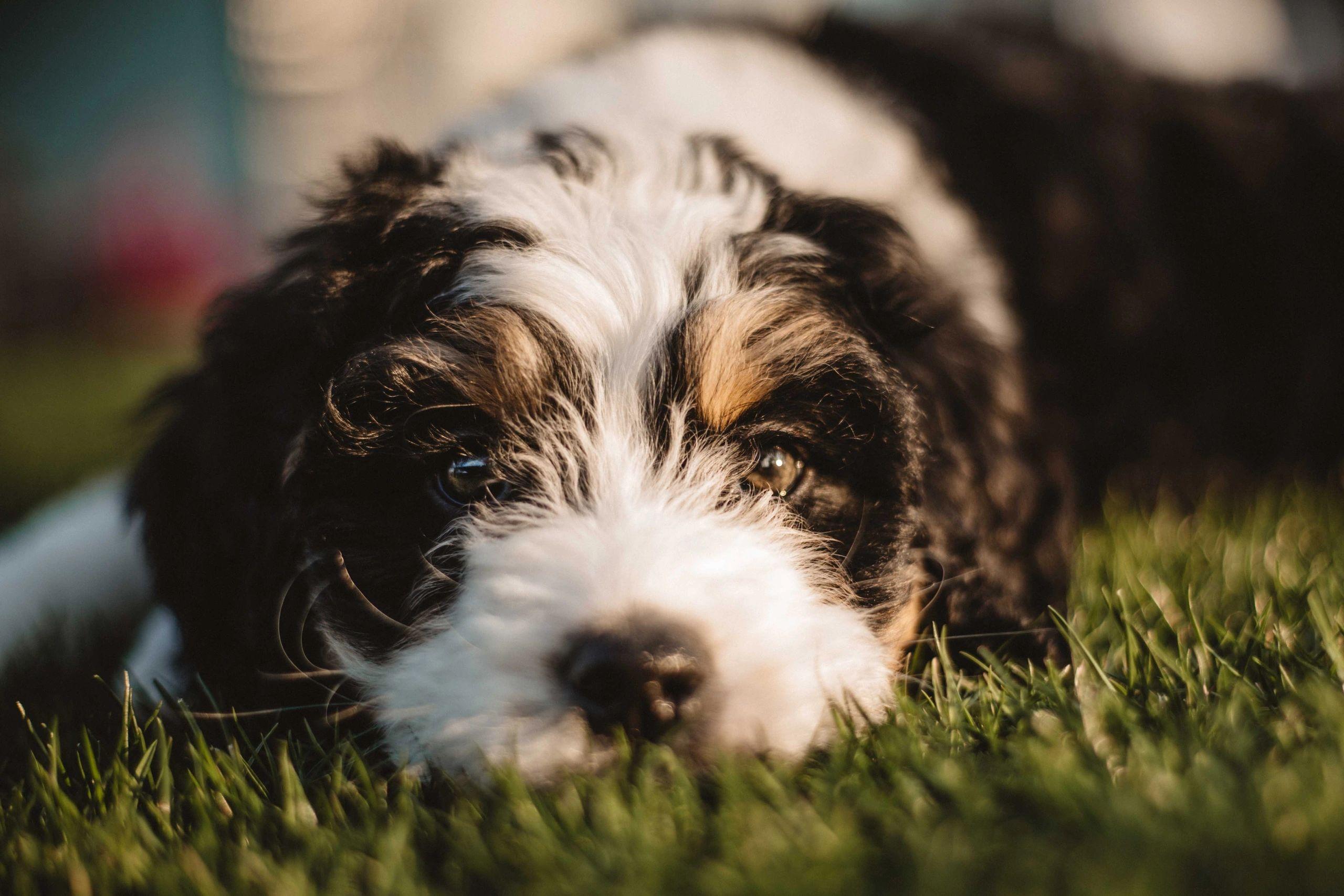 Flori Bama Small Breed Rescue - Dog Rescue, Pet Adoption