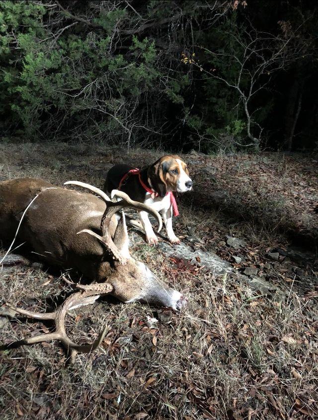 Oklahoma Deer Dogs | Oklahoma Blood Trackers
