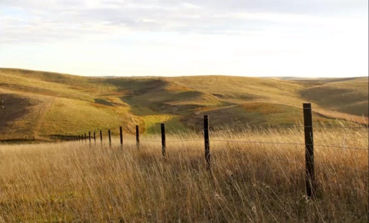 Split Ear Ranch Loup City, NE - Cattle Equipment, Fencing Supplies