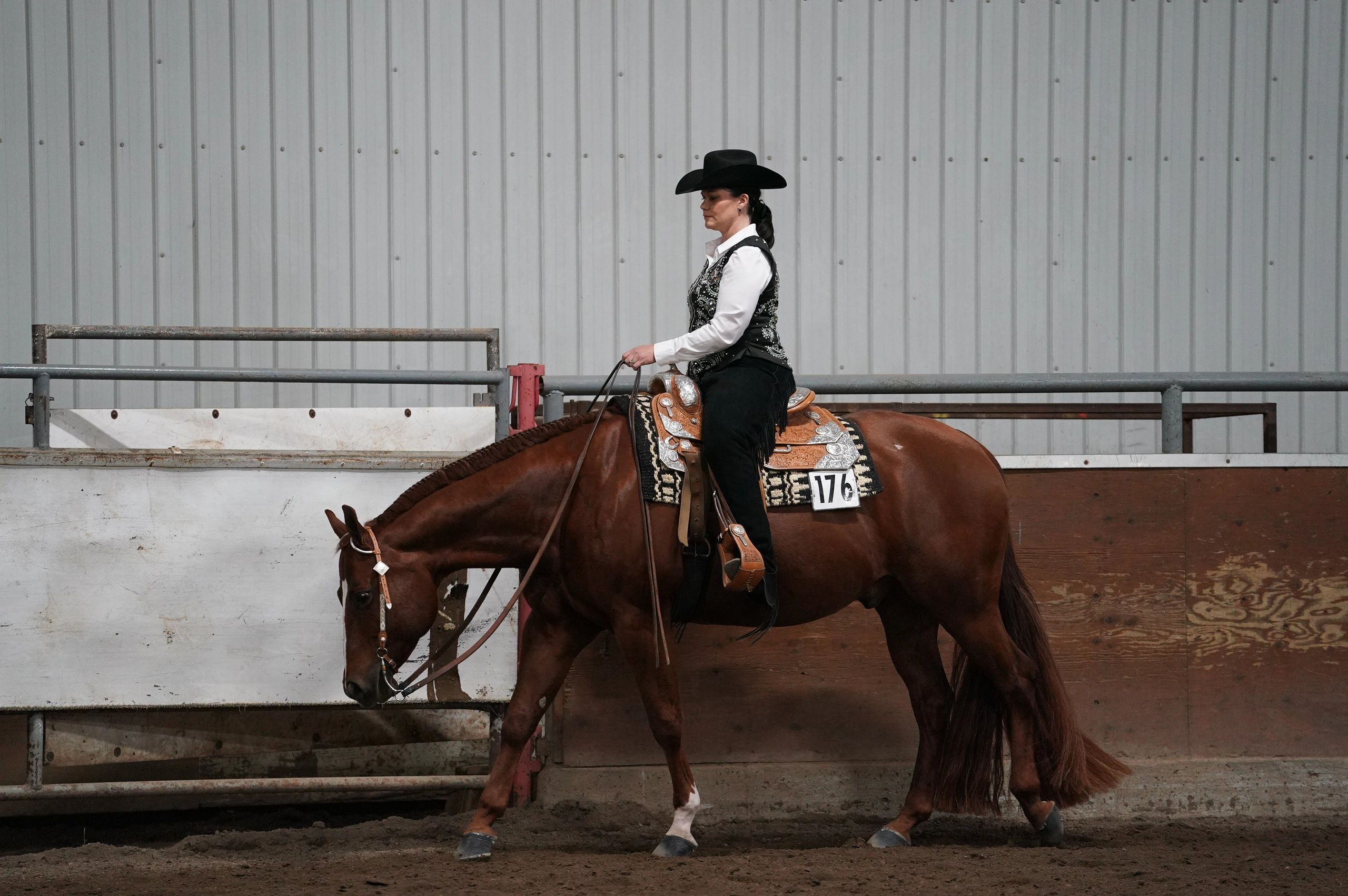 Quarter Horse Association of Alberta