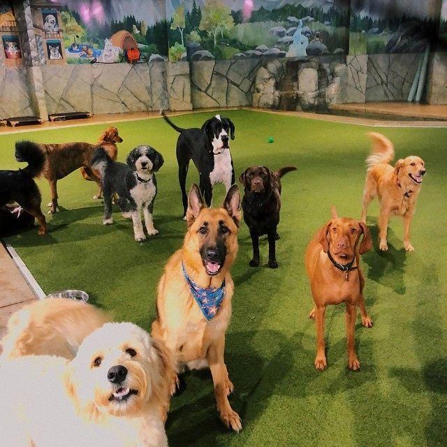 Doggie Daycare...And More - Dog Boarding, Dog Daycare, Dog Hotel