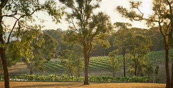 Wandin Vineyards