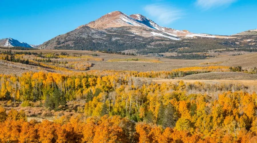 Wild By Nature-Alpine Lakes, Rugged Backcountry, Beautiful Meadows,& more