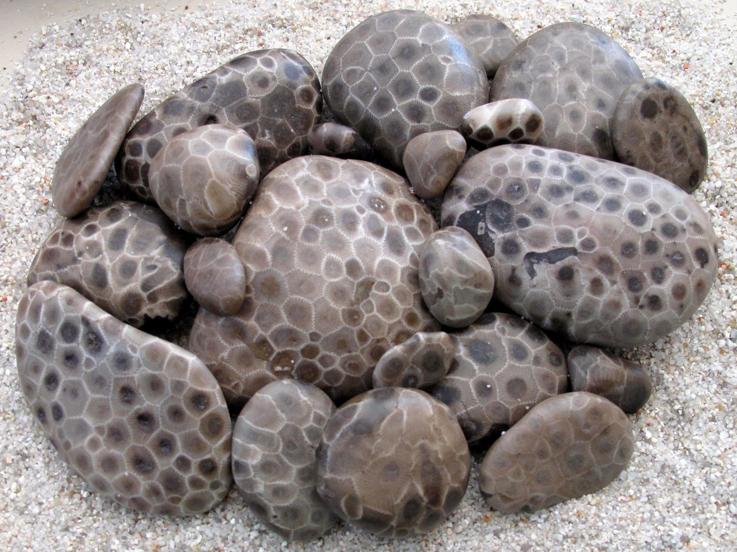 How To Polish Petoskey Stones Nature S Treasures