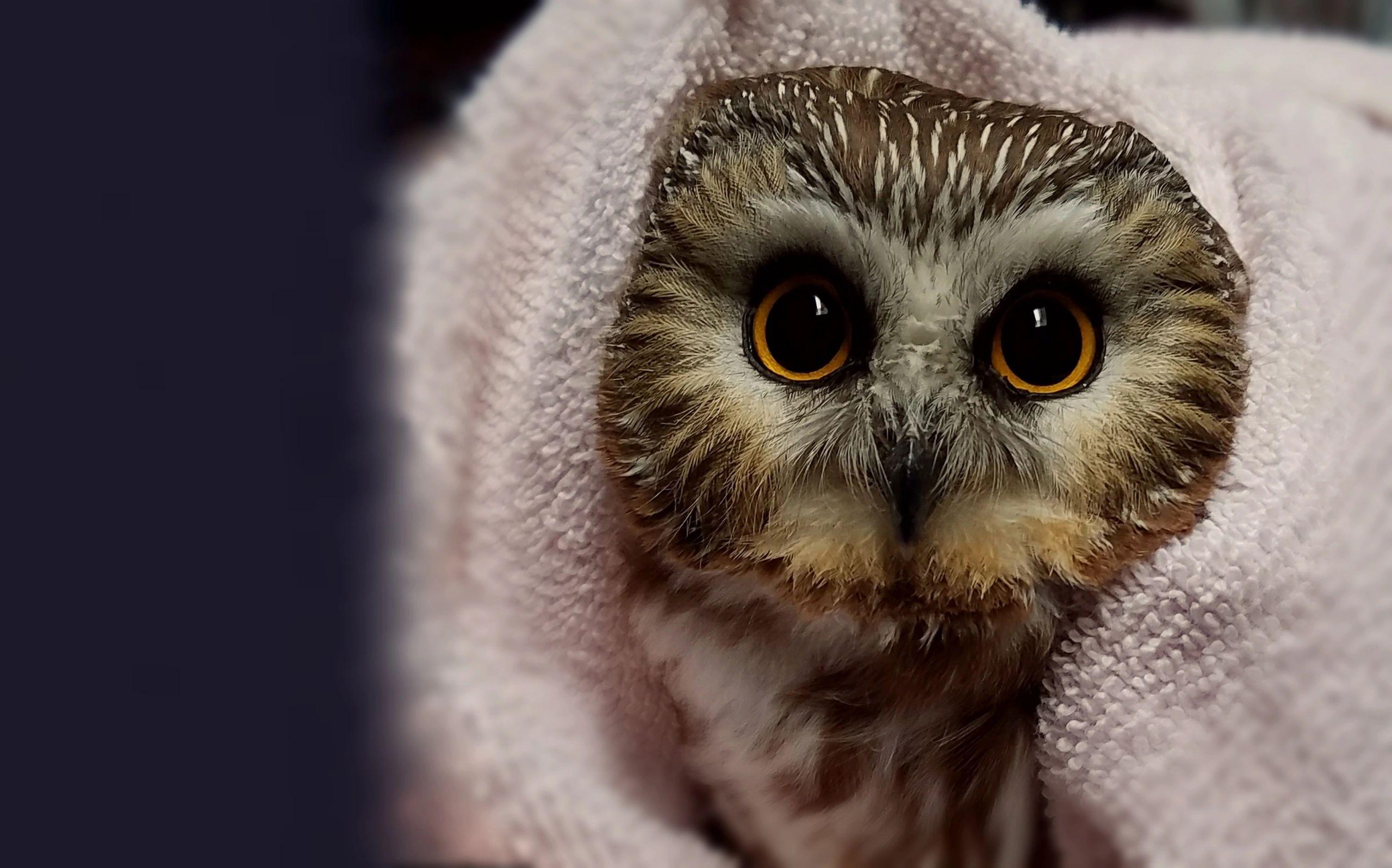 Wildlife Rehabilitation Center of Northern Utah - Injured