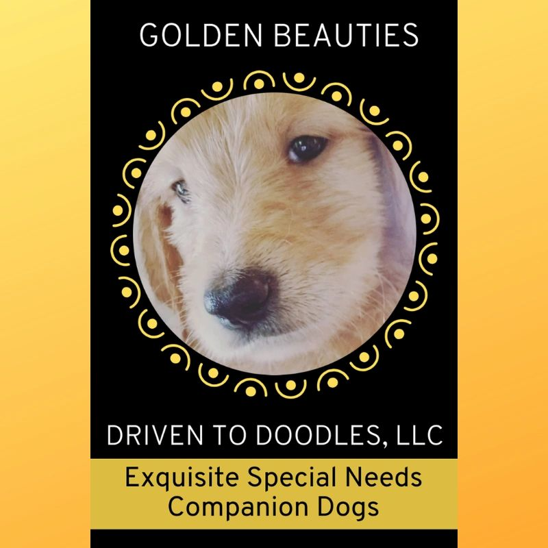 Goldendoodles & Labradoodles - Golden Beauties Driven to