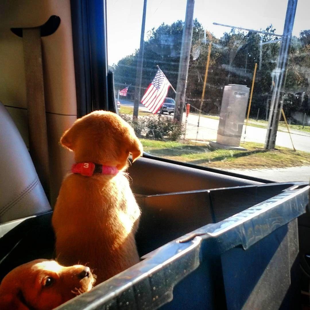 Williams Red Fox Labs - Breeder, Puppies, Stud Dog