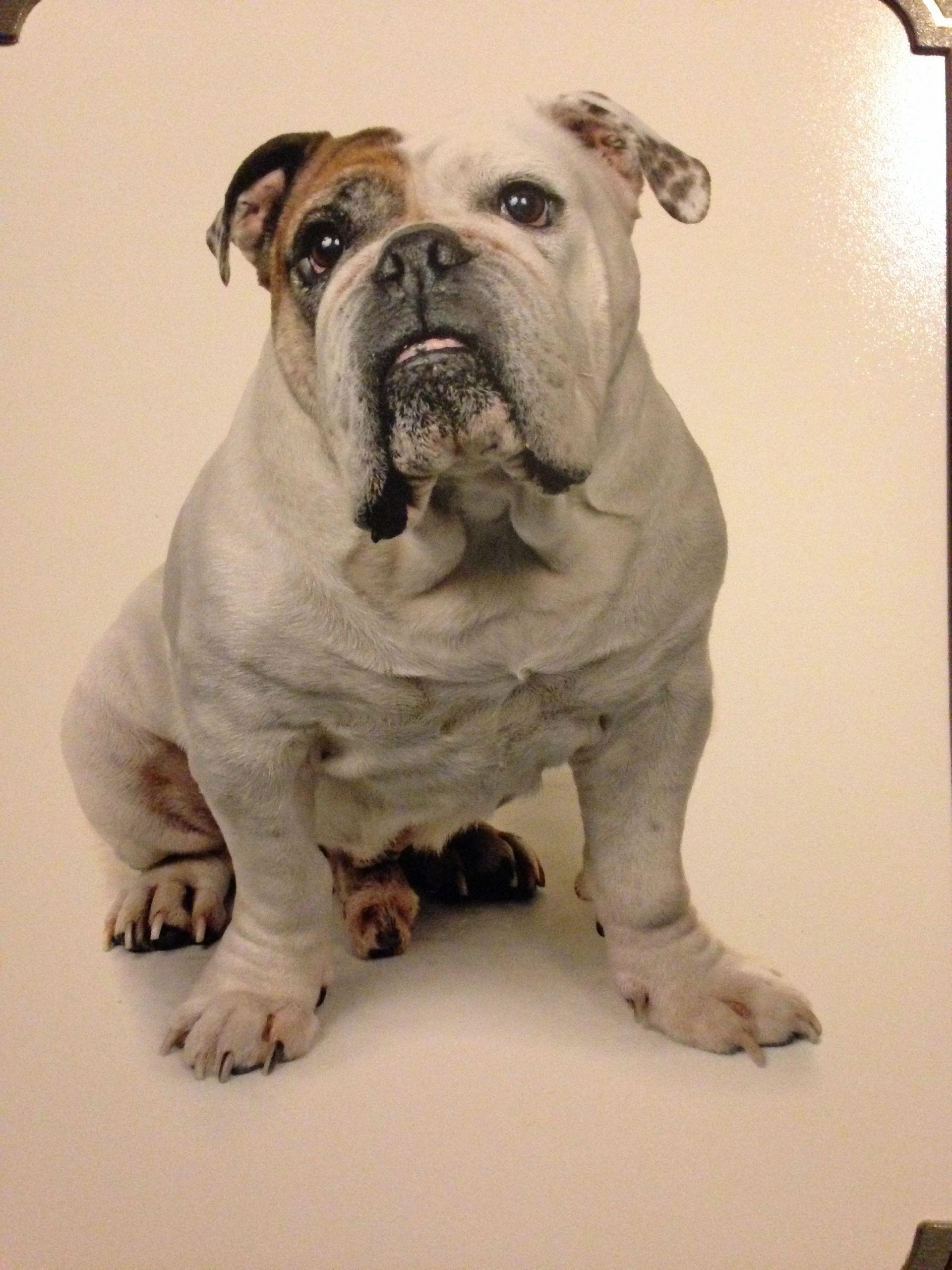 Dog Grooming Attleborough