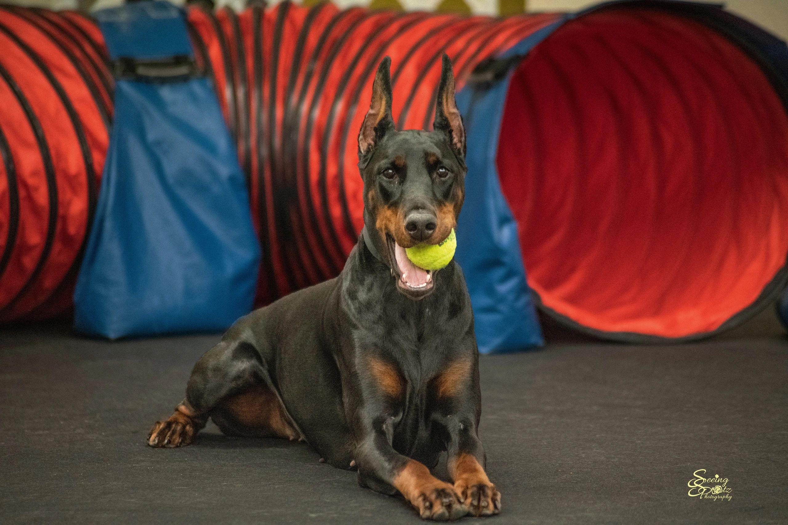Xcel Canine Training Center