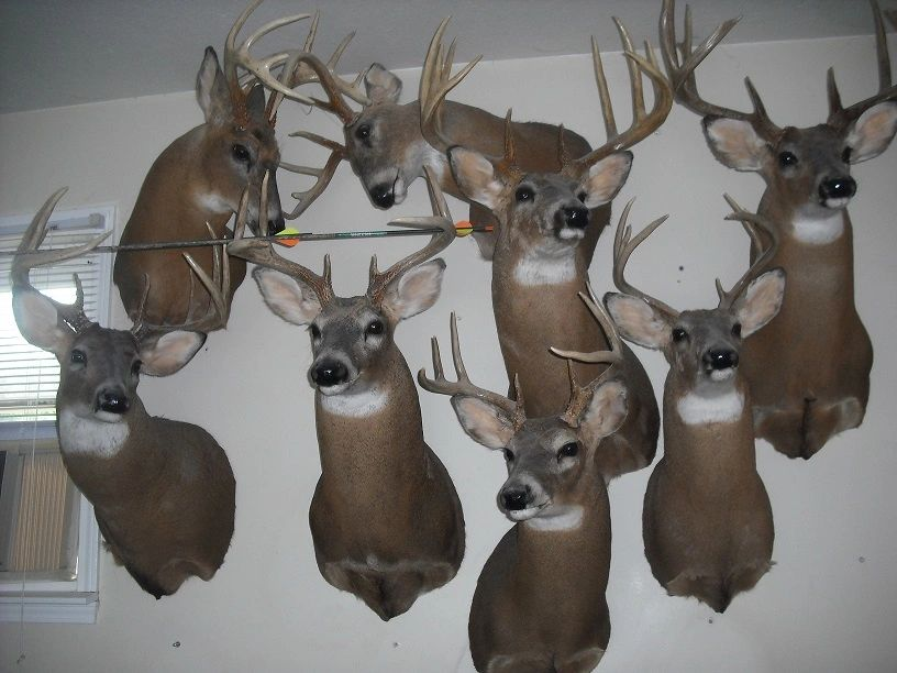 Pricing | Fireside Taxidermy
