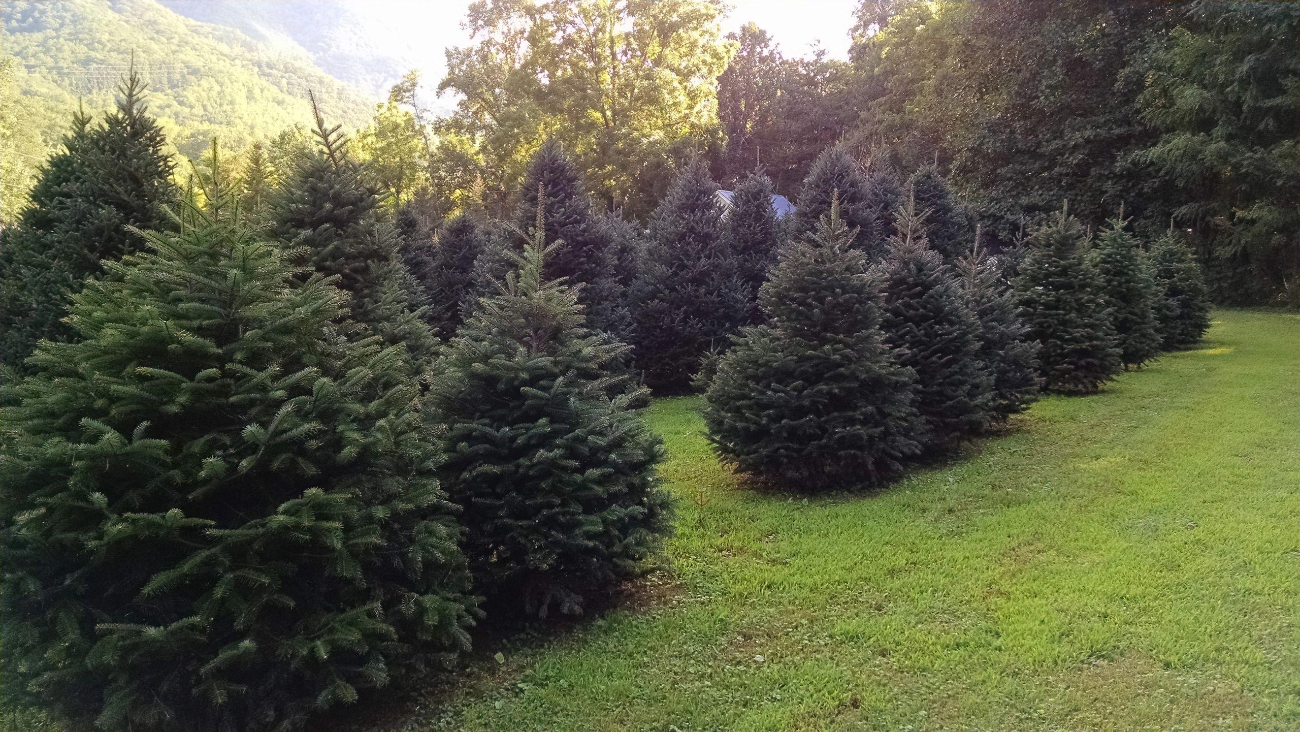 Contact Us | Fir Heaven Sake Christmas Tree Farm