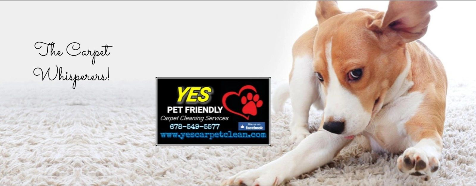 Yes Pet Friendly Carpet Cleaning In Sugar Hill Georgia