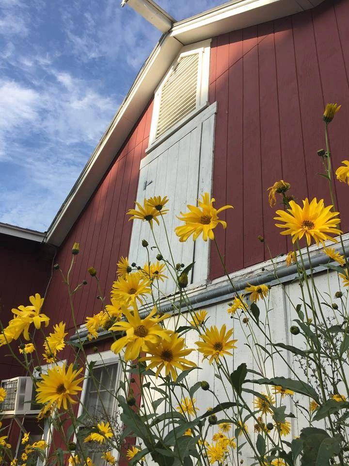 Forage Feeds/Hay | Sunny Nook Farm