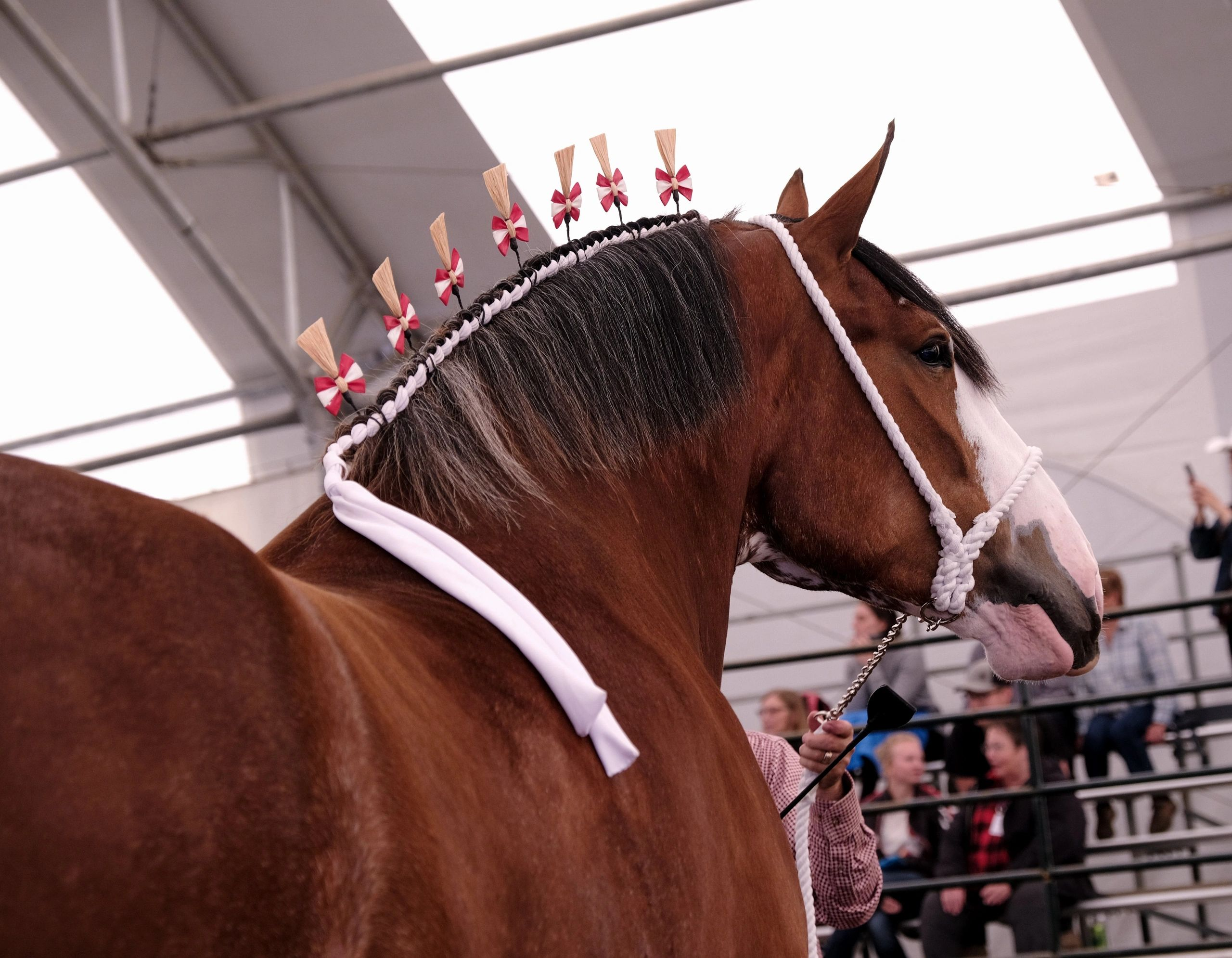 Canwest Clydesdales