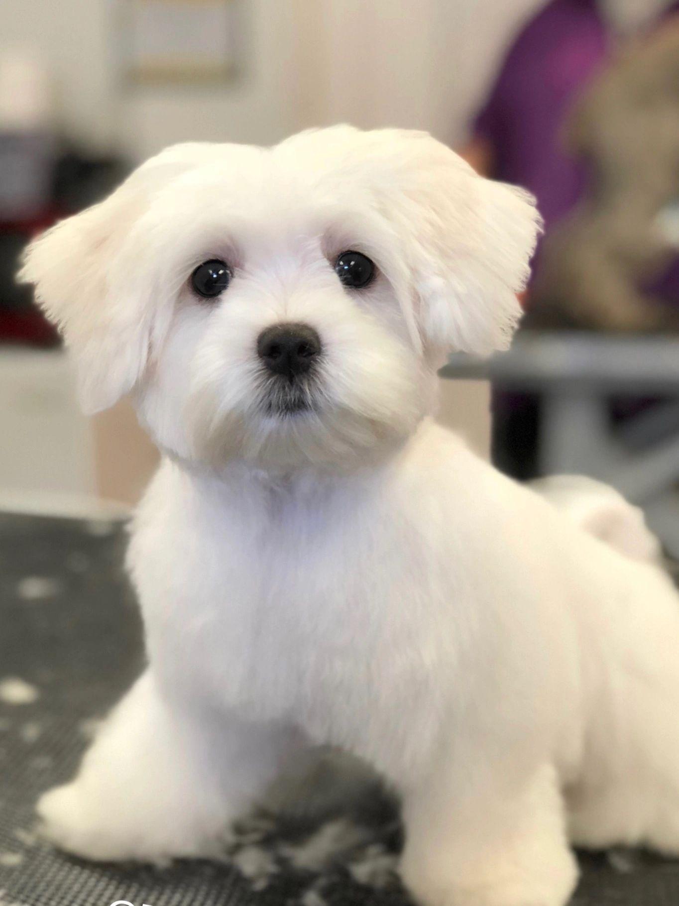 Pet Grooming Furrever Friends Pet Boutique Grooming Salon