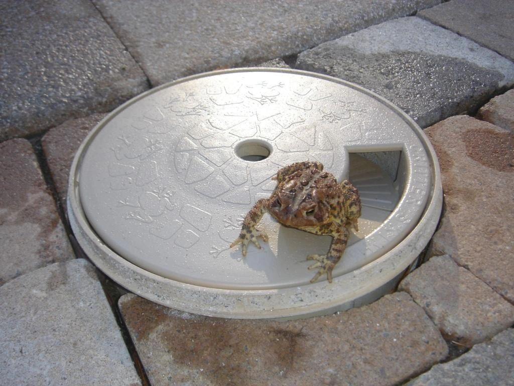 1 Pool Skimmer Frog Amp Critter Escape Ramp