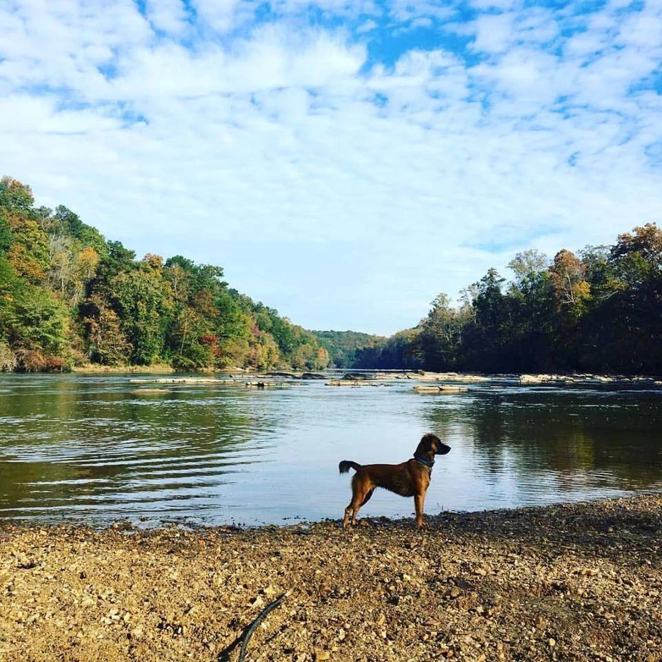 Dog Walking Service Atlanta