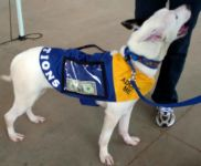DONATIONS Dog Vest