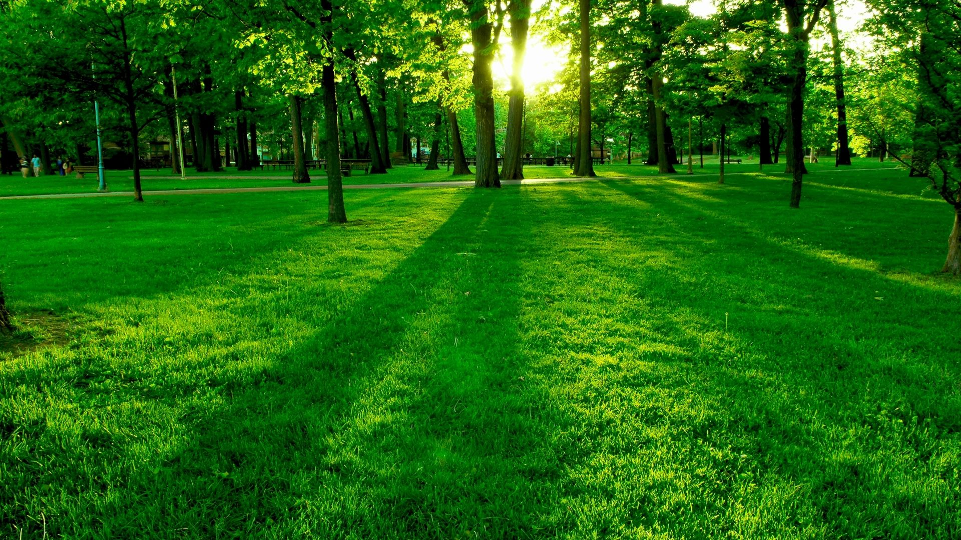 Jones Tree Lawn Arborist Arvada Colorado