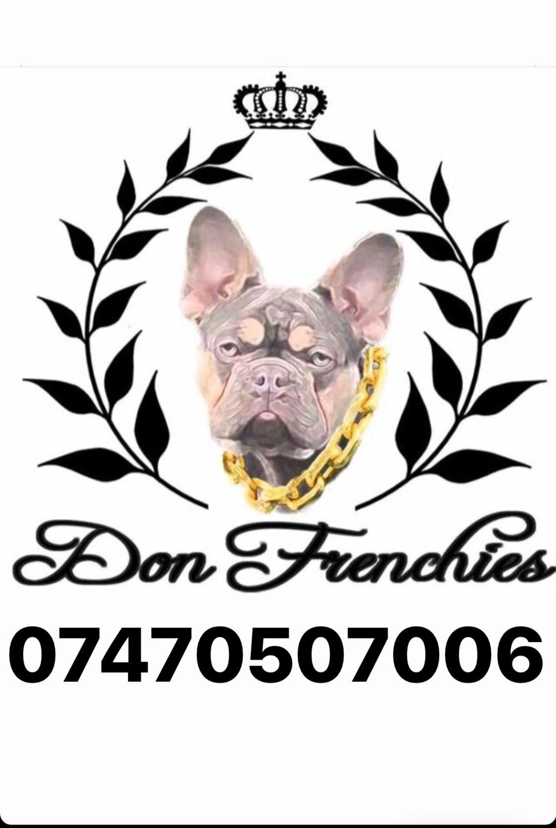 Donfrenchies French Bulldogs Junior Obeng Donfrenchies