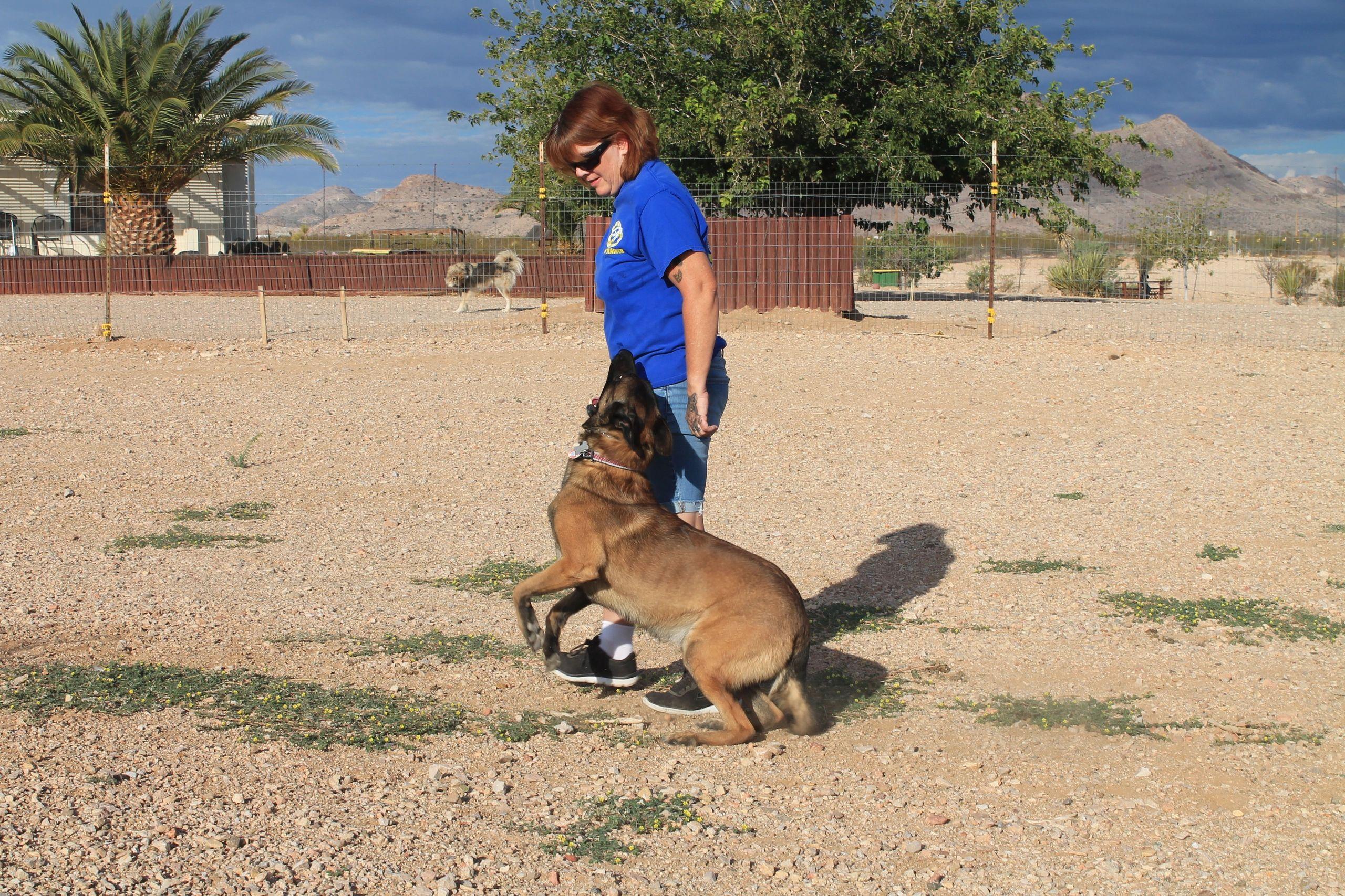 K9 Paws Behavior Dog Training Home