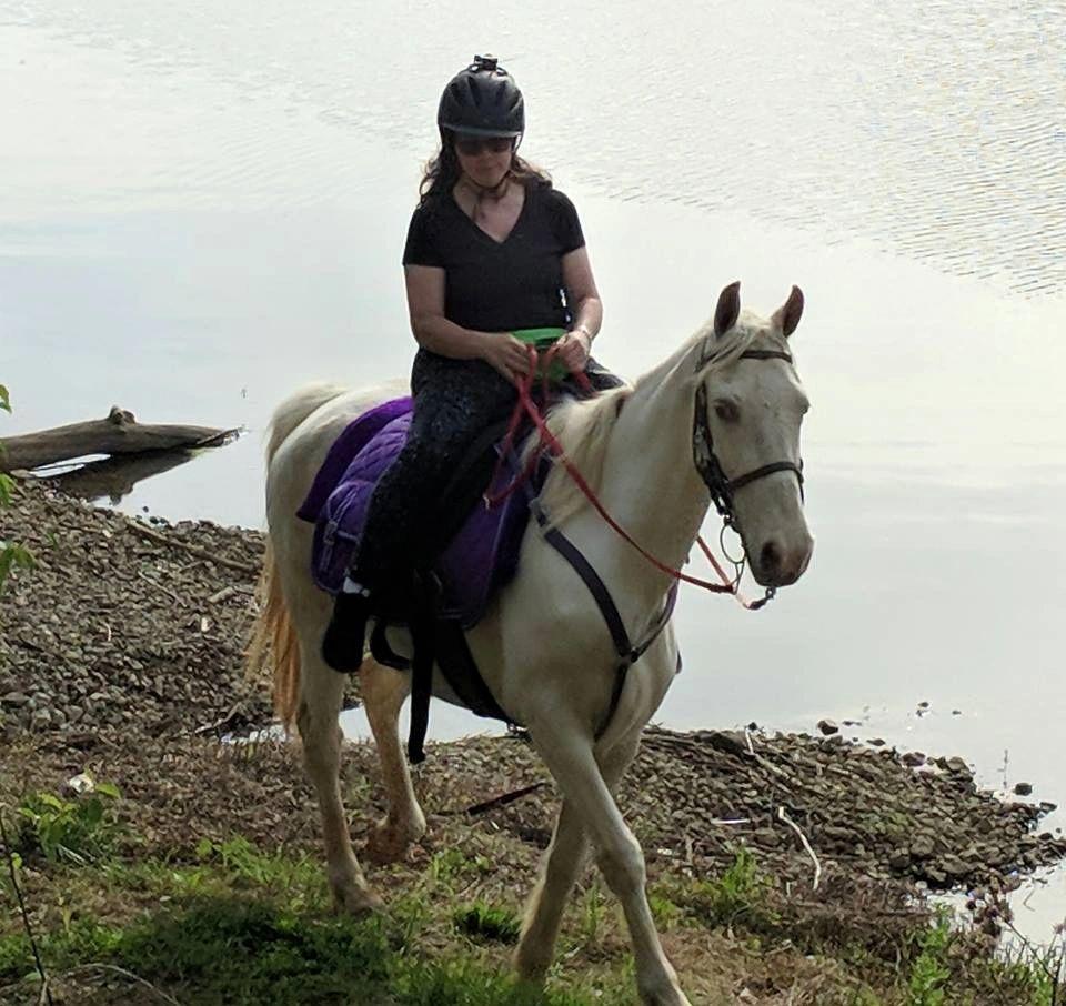 Lake Meadow Farm - Horse Boarding, Horse Riding | Lake Meadow Farm