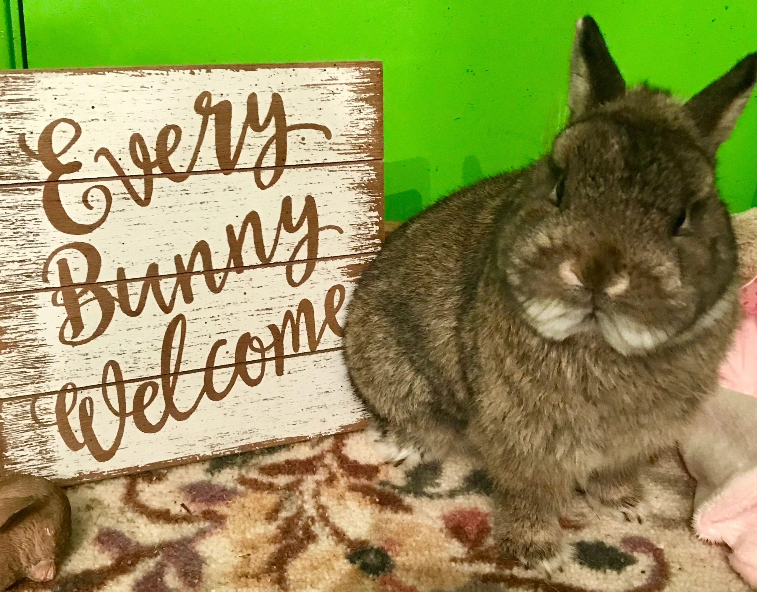 showing success news   Bunny Foo Foo's Rabbitry