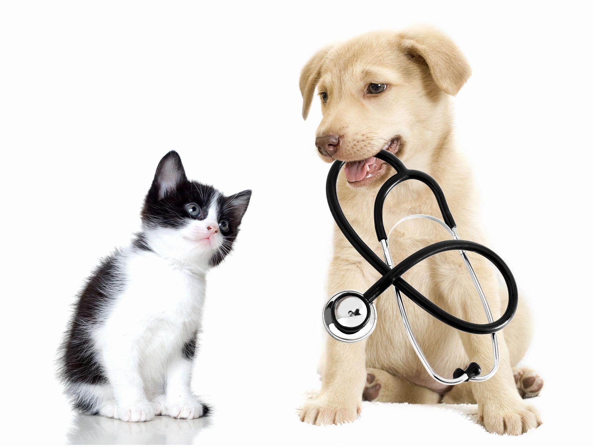 Spay and Neuer Clinic, Pet Vaccinations - Watauga, Texas