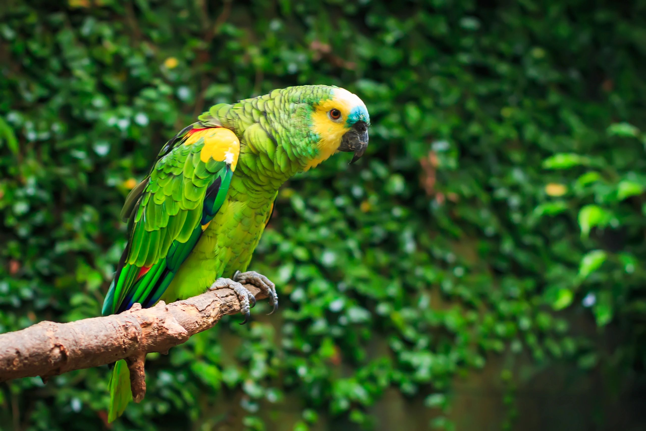 HOME | Exotic Feathers Pet Shop